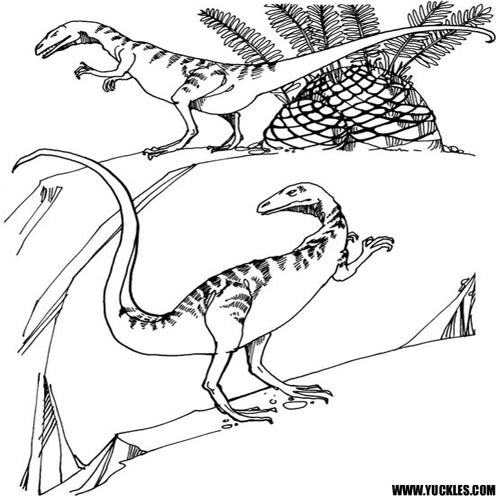 coelophysis coloring page compsognathus coloring page