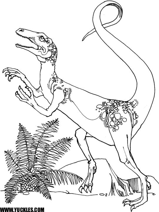 ornitholestes coloring page