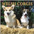 Welsh Corgi Calendars