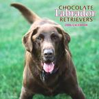 Chocolate Lab Calendars