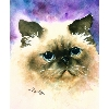 Himalayan Cat T-Shirts