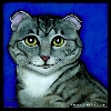 Scottish Fold Cat T-Shirts