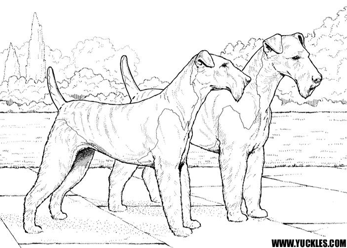airedale terrier coloring page by yuckles