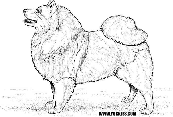 Eskimo Dog Coloring Page by YUCKLES!