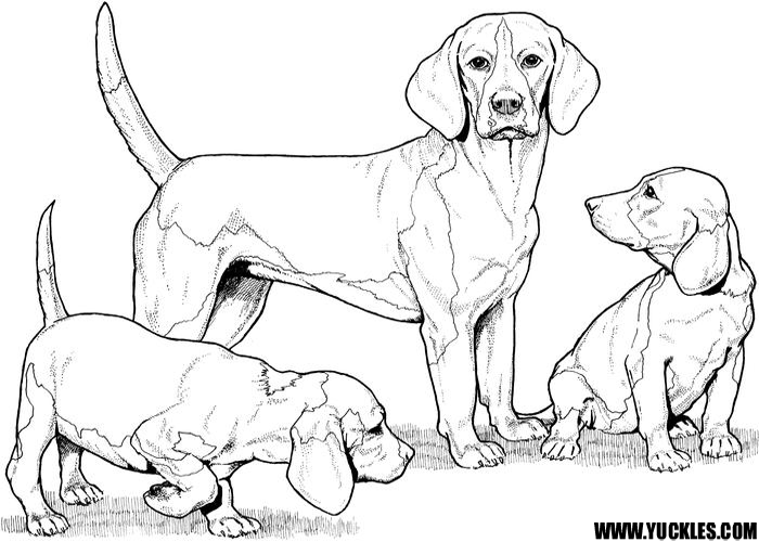 Beagle Coloring Page by YUCKLES!