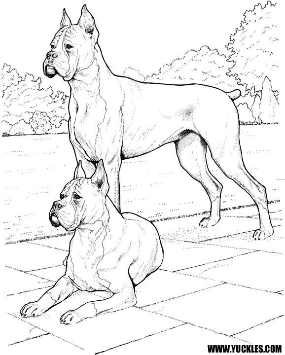 baby boxers coloring pages - photo #37