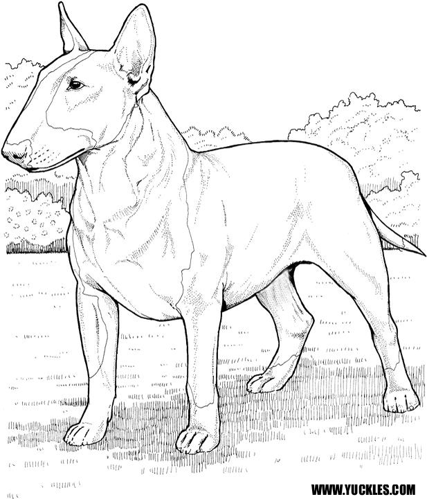 scottish terrier coloring pages - photo#17