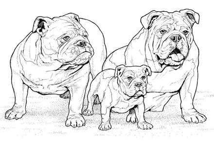Dog Faces Coloring Pages e Bulldog Coloring Pages