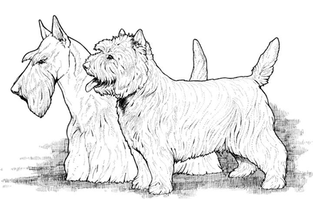 goldendoodle puppy coloring pages - photo#18