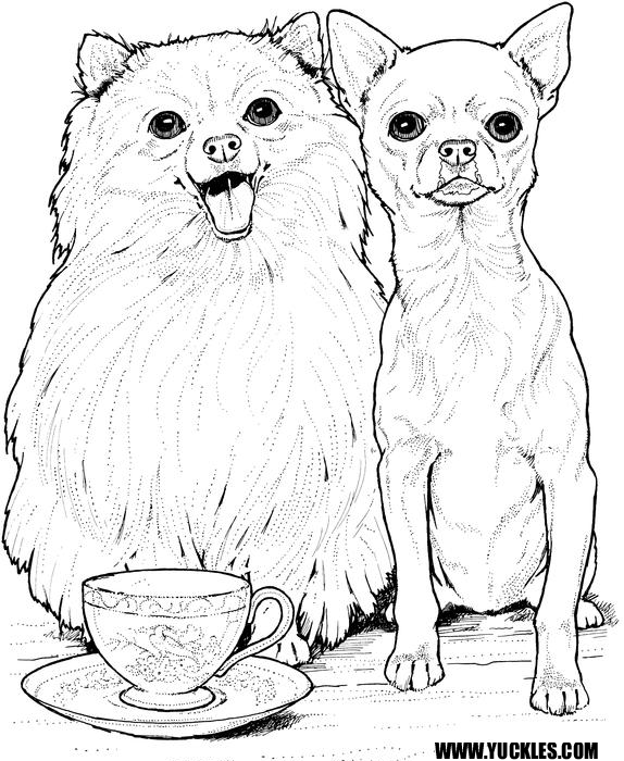 besides Miniature Schnauzer 2 besides english bull terrier coloring page together with dog 34 moreover 3 1673 as well Trick or Treat on Halloween Day Coloring Page besides  further ShihTzuPuppy likewise  moreover  furthermore how to draw a collie puppy collie puppy step 6 1 000000072765 5. on chihuahua dog coloring pages for adults