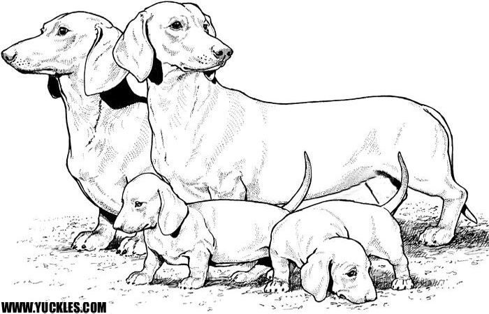Dachshund Coloring Page by YUCKLES