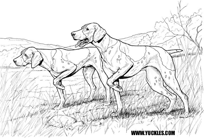 German Shorthaired Pointer Coloring Page by YUCKLES!