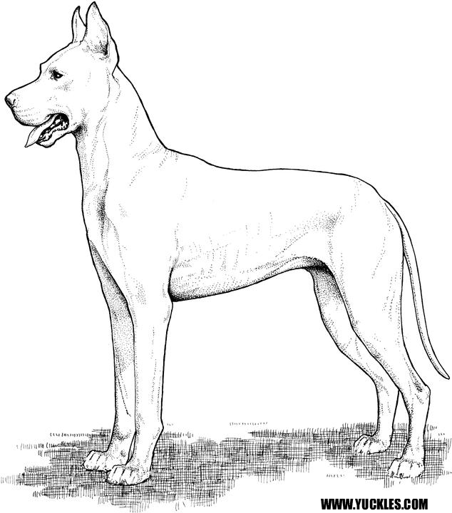 Great Dane Coloring Page