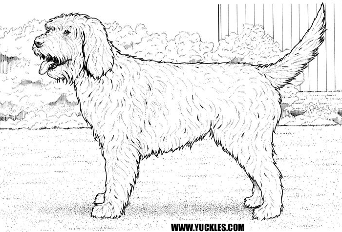 Labradoodle Coloring Page by YUCKLES