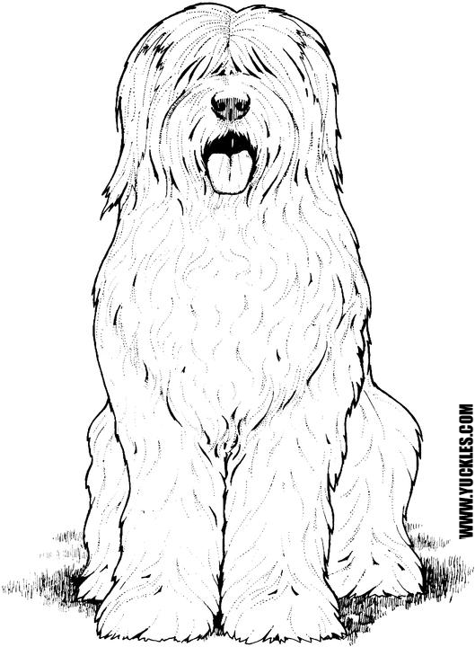 Goldendoodle Puppy Coloring Pages Coloring Pages