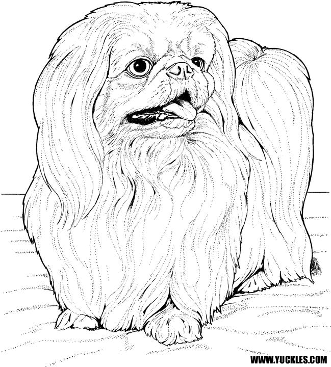 Pekingese Coloring Page by YUCKLES
