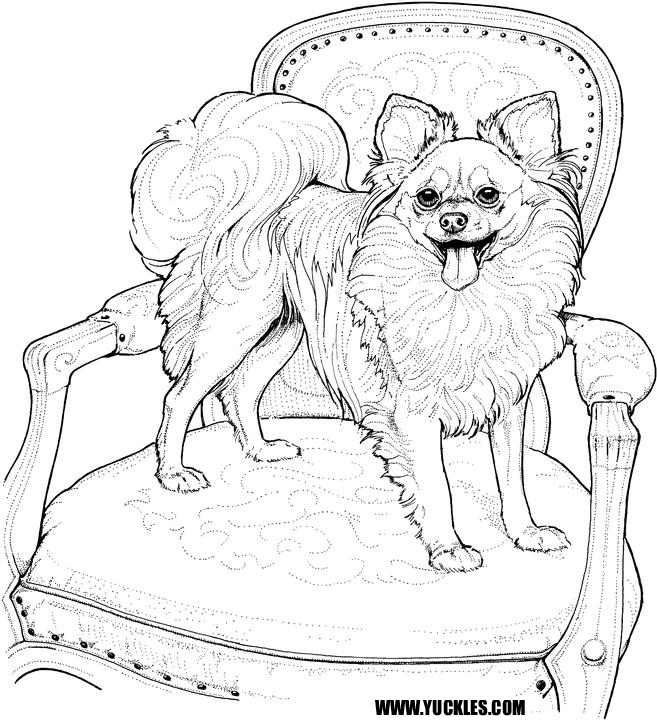 Pomeranian Coloring Page by YUCKLES!