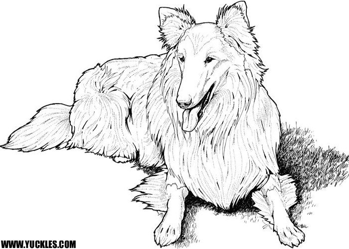 sheep dog coloring pages - photo#21