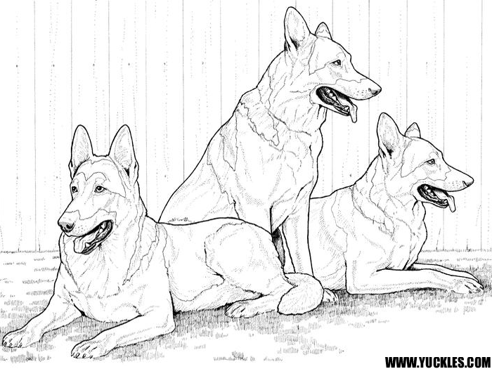 husky dog coloring pages - coloriage de husky a imprimer