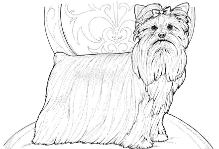 Dog Coloring Pages By Yuckles Yorkie Coloring Pages