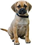 Puggle Gifts