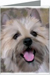 Cairn Terrier Greeting Cards