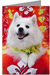 American Eskimo Dog Greeting Cards