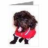Yorkipoo Greeting Cards