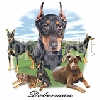 Doberman Pinscher T-Shirts