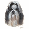 Shih Tzu Greeting Cards