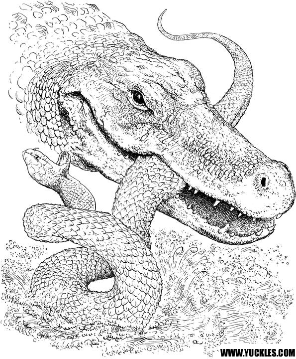 coloring pages for reptiles alligators - photo#12