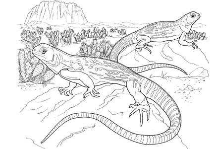 reptile coloring pages by yuckles reptile coloring pages for kids printable reptile amphibian coloring pages