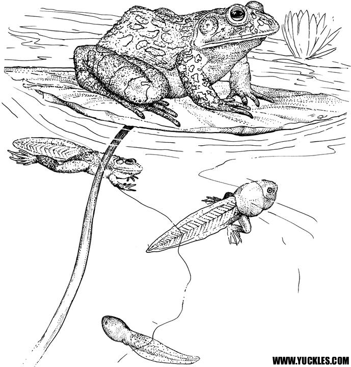 Reptile Coloring Pages by YUCKLES
