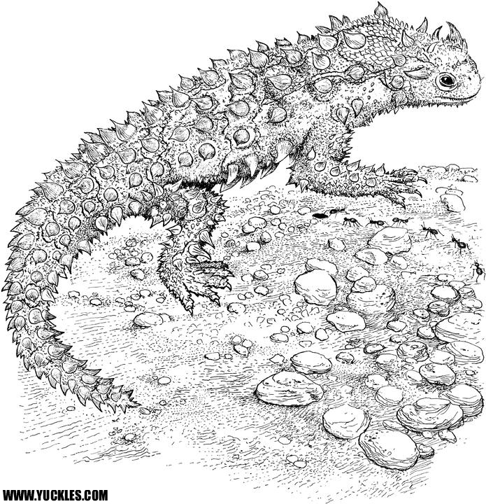 Gila Monster Coloring Page Horned Lizard
