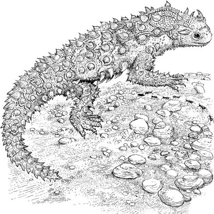Horned Lizard Coloring Page