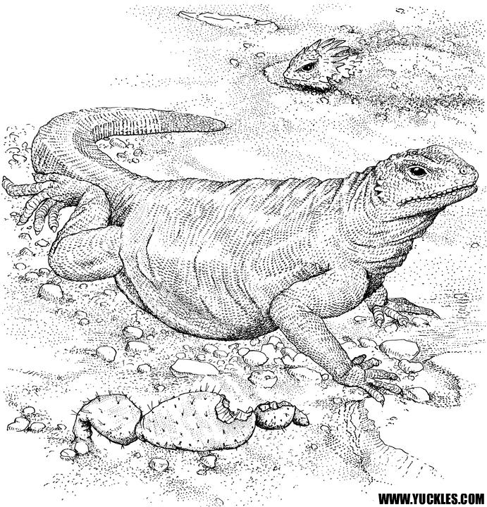 Komodo Dragon Coloring Page By Yuckles