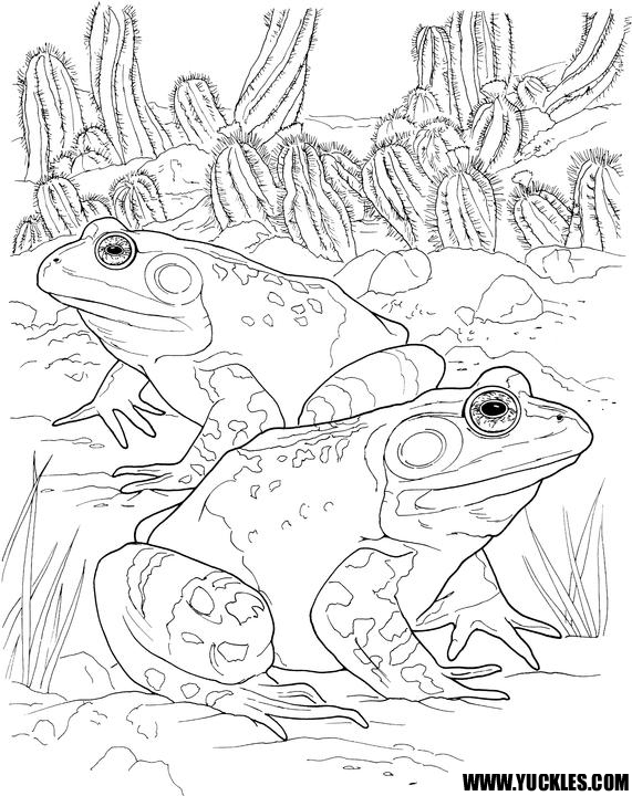 Toad Coloring Page By YUCKLES