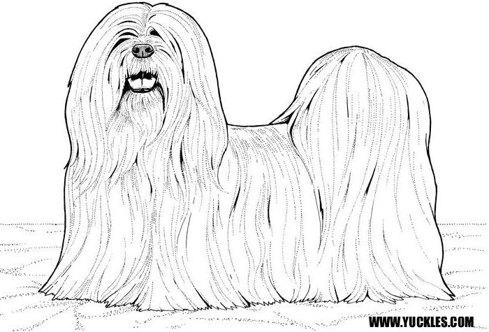 It is an image of Massif Shih Tzu Coloring Pages